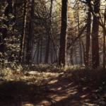 Blair Witch najlepszą polską grą 2019 r.! 1